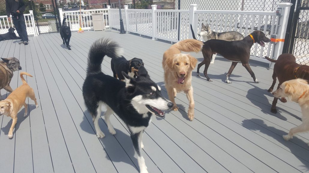 The Board Hound Shirlington: RoofTop Play™