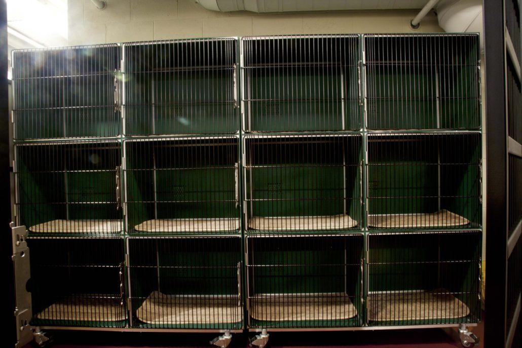 The Board Hound Shirlington: Condos